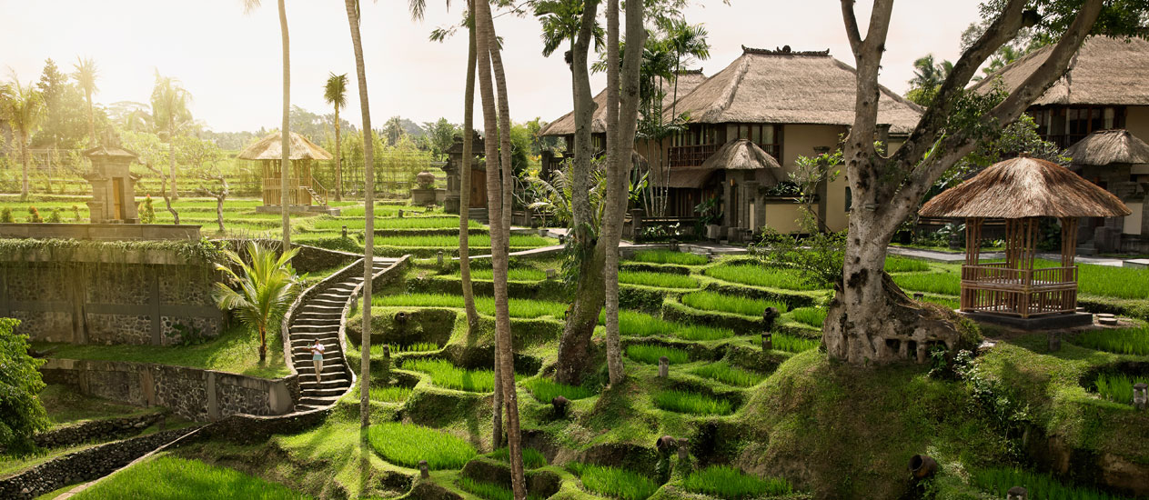 Ubud Picnic Lunch At Vedika In Rice Paddies Or The Boat In