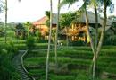 Duplex Villa with ricefield view